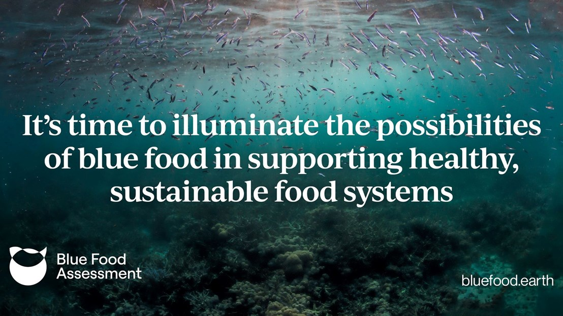 Blue Food Assessment shows benefits of salmon farming