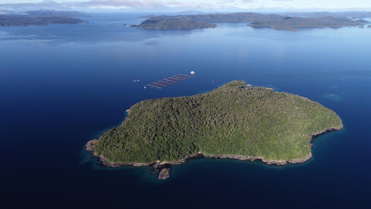 En el 2T: Mowi cosechó 14.000 toneladas de salmónidos en Chile