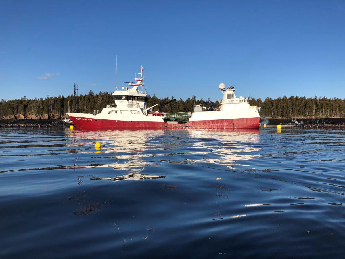 Freshwater aids salmon health