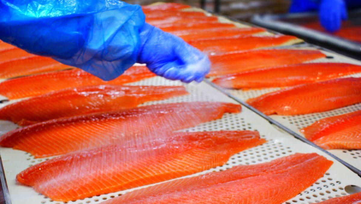 Il salmone è un alimento sicuro
