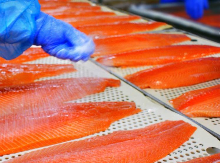 Un salmone sicuro