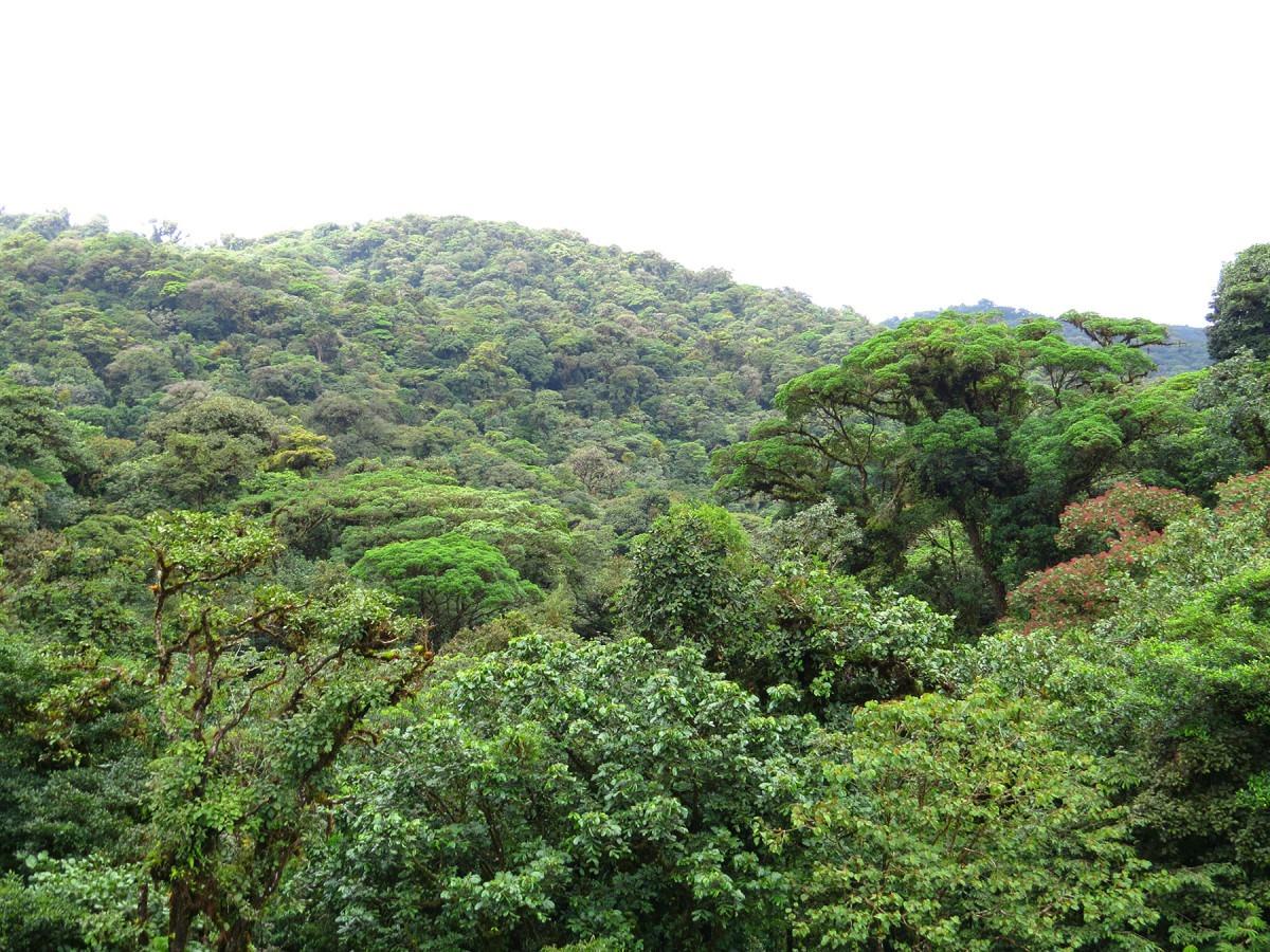 Mowi tra le molte aziende e investitori che sollecitano lo stop alla deforestazione in Brasile