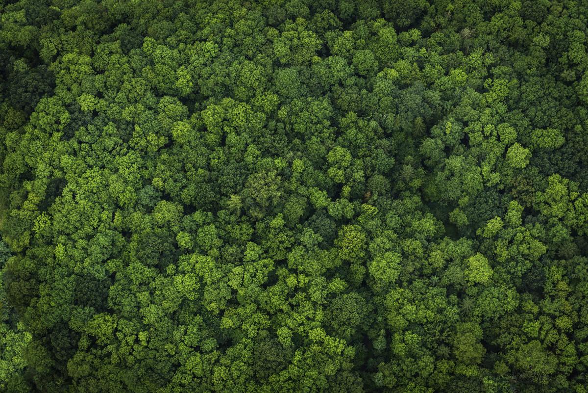 I fornitori di soia di Mowi si impegnano in una supply chain al 100% esente da deforestazione