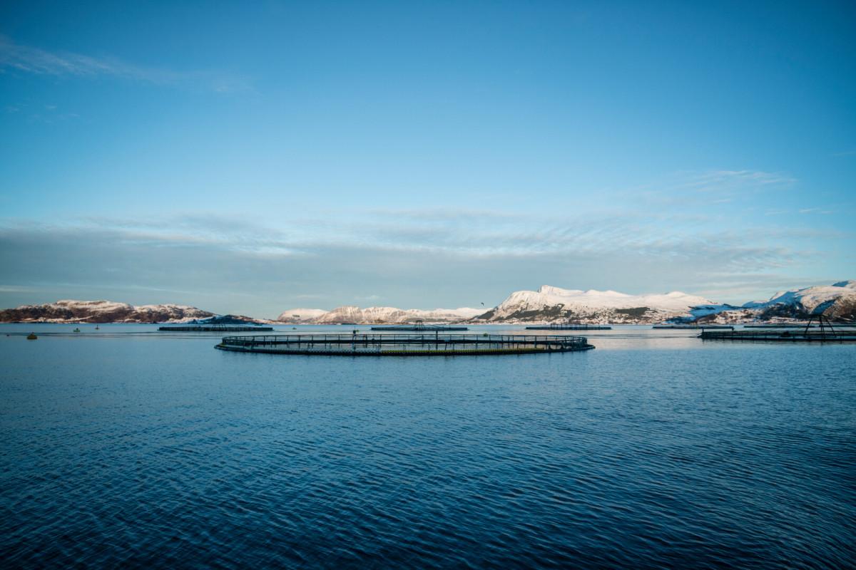 Mowi diventa membro di Sjømat Norge