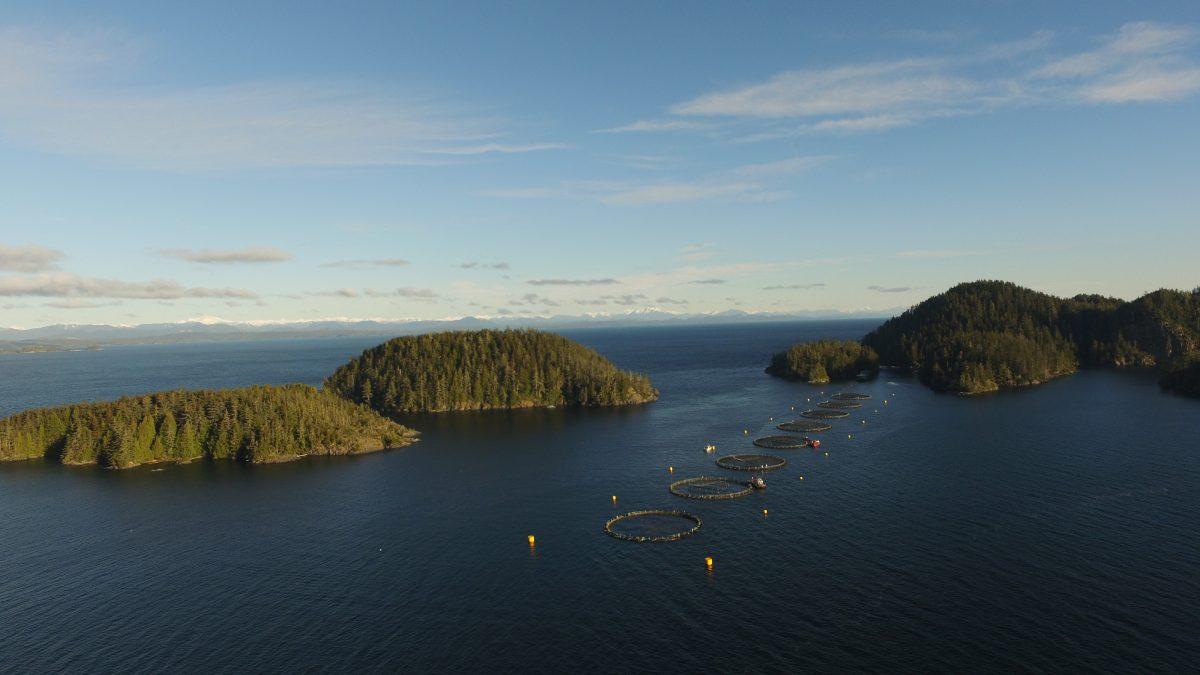 Doyle Island