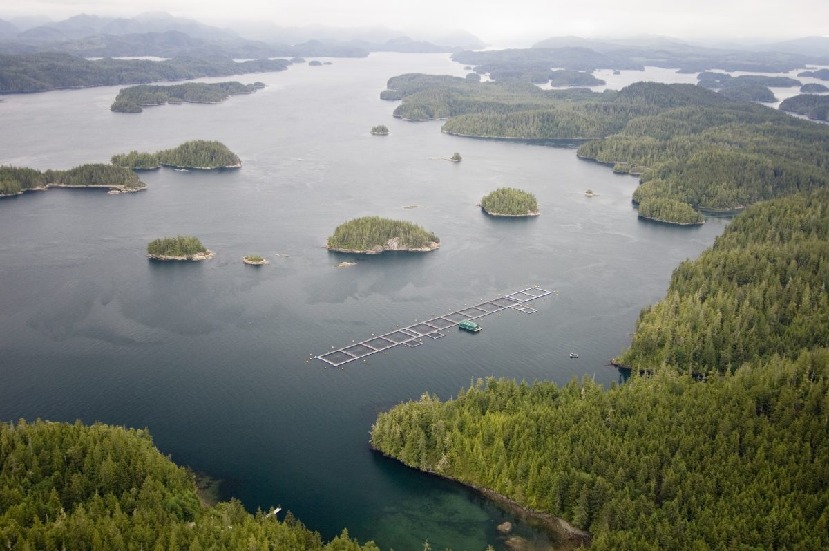 100% of Mowi Broughton Archipelago Farms Now Certified to ASC Salmon Standard