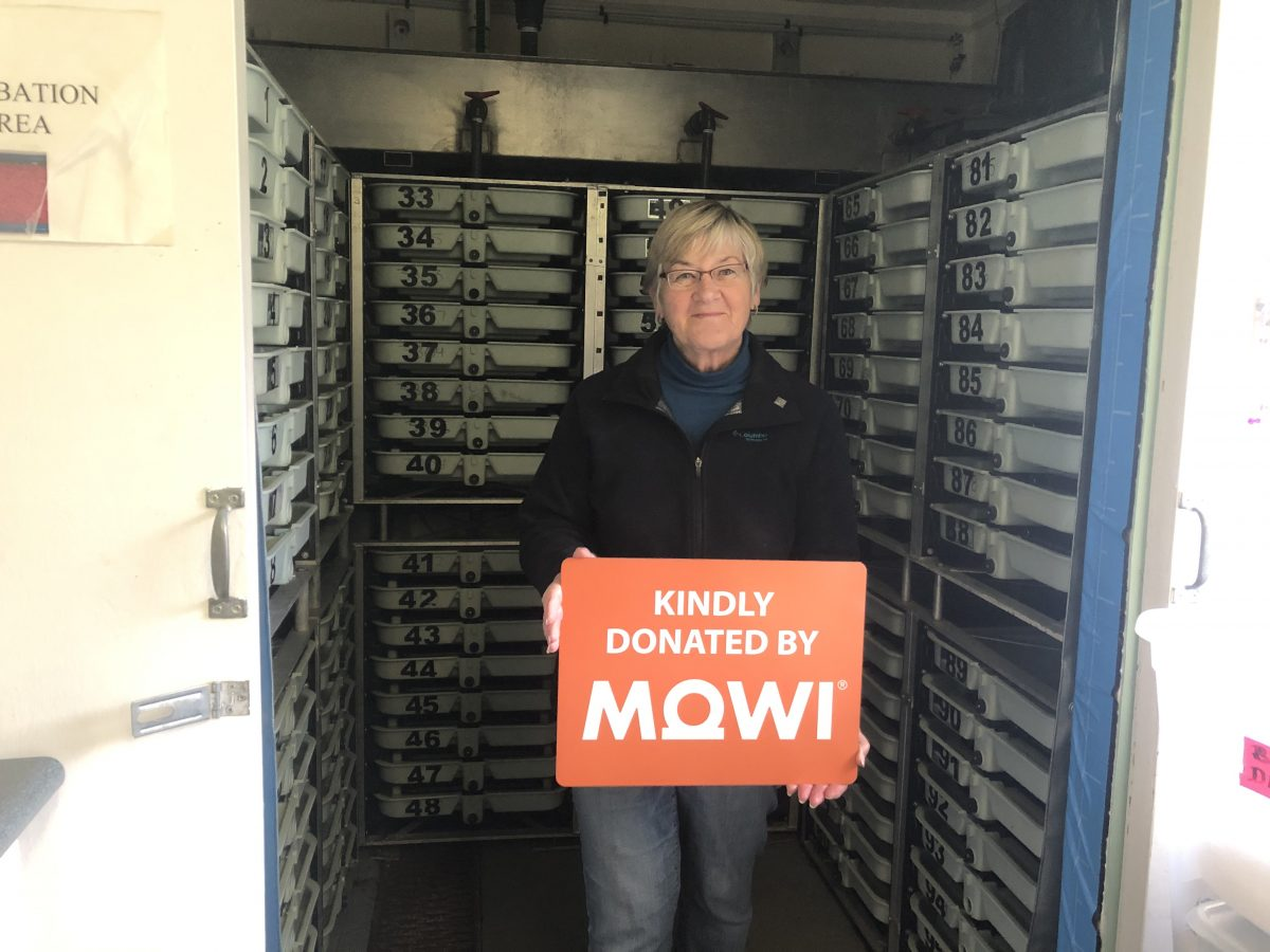 Mowi Supports Fanny Bay Salmon Enhancement Work